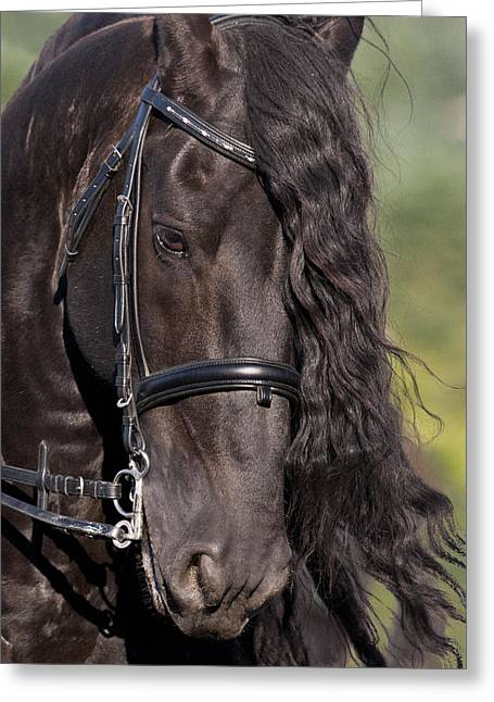 Portrait Of A Friesian Greeting Card