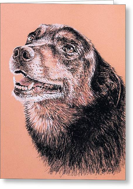 Portrait Of A Good Looking Dog Greeting Card