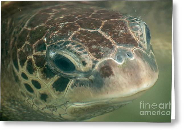 Portrait Of A Green Sea Turtle Greeting Card