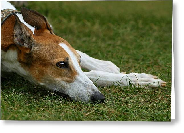 Greeting Card featuring the photograph Portrait Of A Greyhound - Soulful by Angela Rath