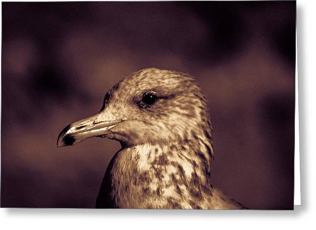 Portrait Of A Gull Greeting Card