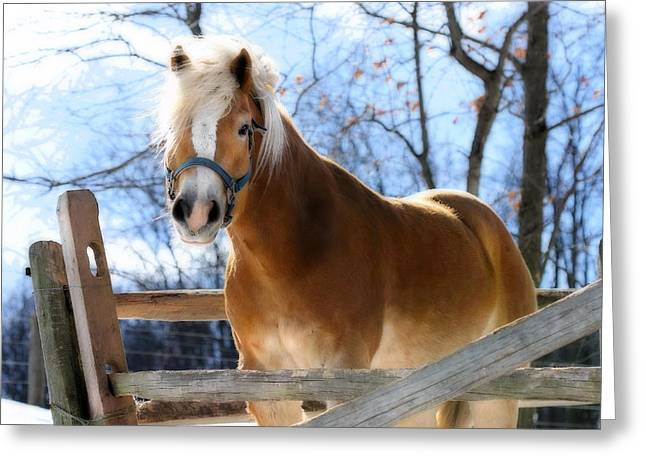 Greeting Card featuring the photograph Portrait Of A Haflinger - Niko In Winter by Angela Rath