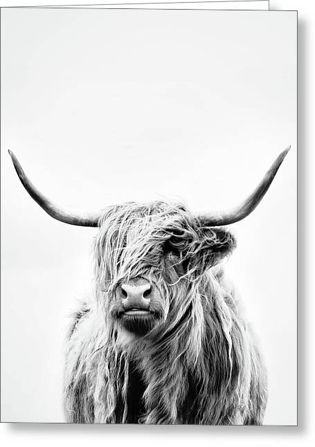 Portrait Of A Highland Cow - Vertical Orientation Greeting Card