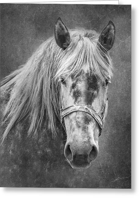 Portrait Of A Horse Greeting Card by Tom Mc Nemar