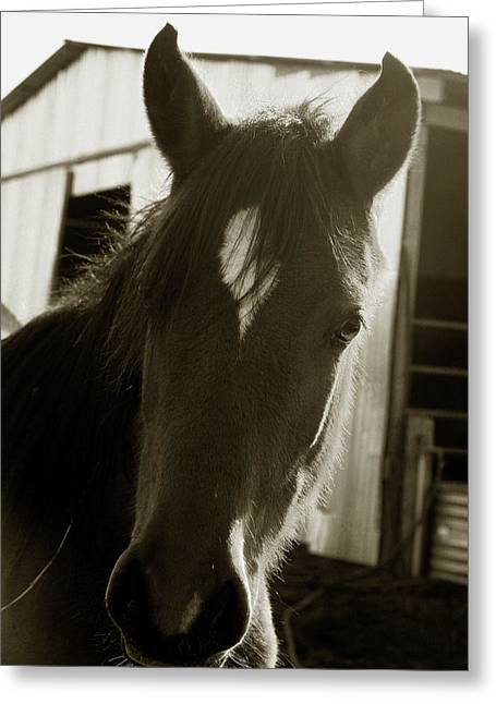 Portrait Of A Horse Greeting Card by Toni Hopper
