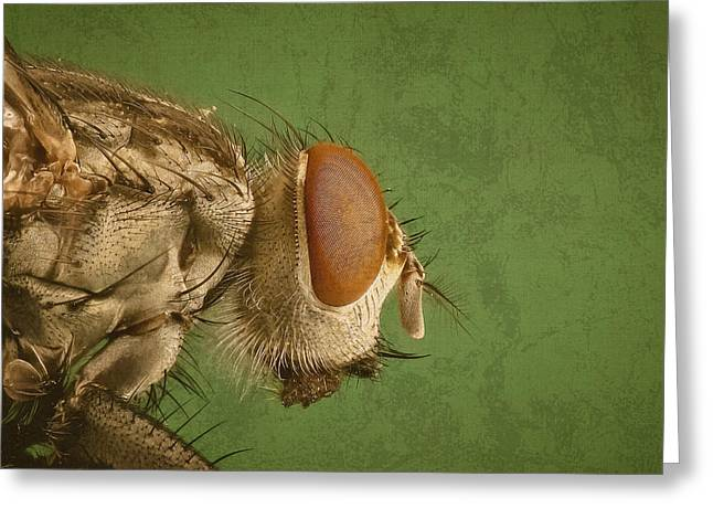 Portrait Of A Housefly Greeting Card by Design Turnpike