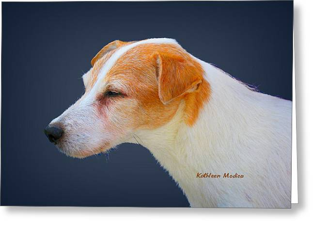 Greeting Card featuring the photograph Portrait Of A Jack Russel by KLM Kathel