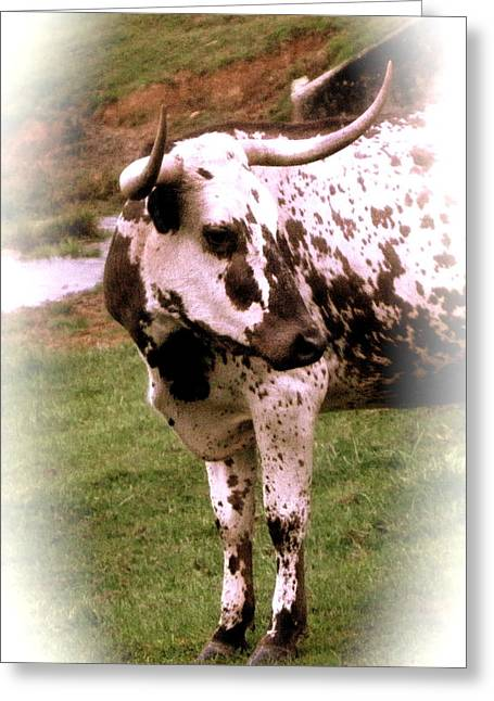 Portrait Of A Longhorn Greeting Card by Elsbeth Lane