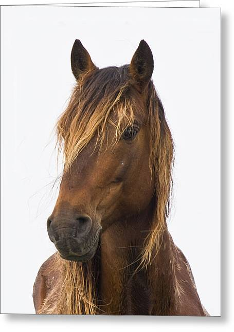 Portrait Of A Mustang Greeting Card