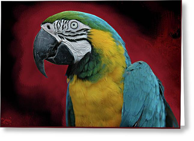 Greeting Card featuring the photograph Portrait Of A Parrot by Jeff Burgess