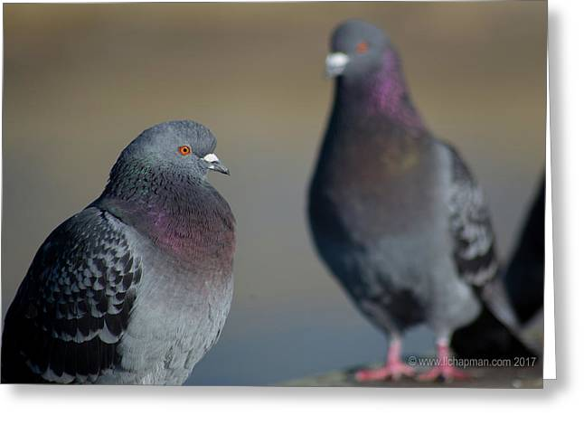 Greeting Card featuring the photograph Portrait Of A Pigeon by Lora Lee Chapman