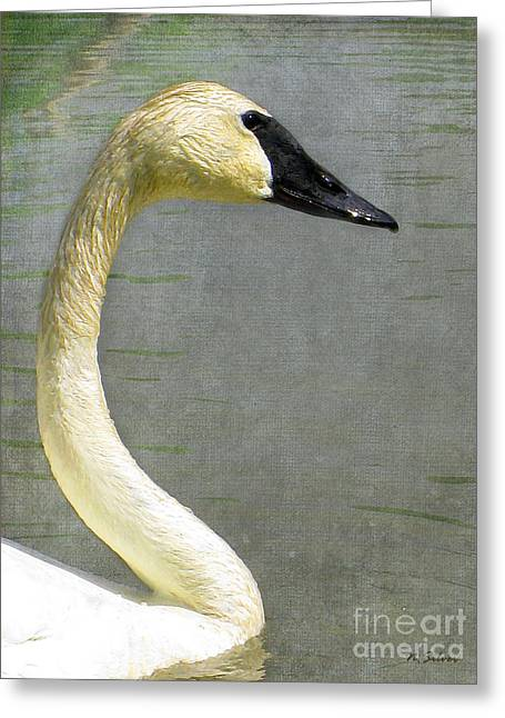 Portrait Of A Pond Swan Greeting Card by Nina Silver