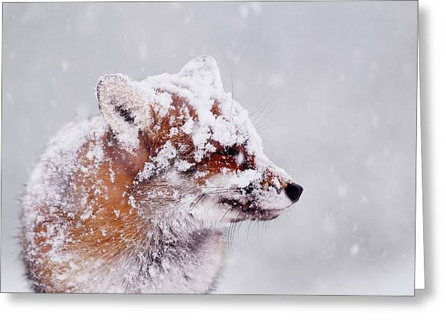 Portrait Of A Red Fox In A Blizzard Greeting Card by Roeselien Raimond