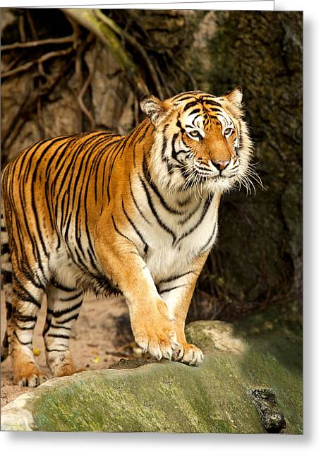 Portrait Of A Royal Bengal Tiger Greeting Card by Anek Suwannaphoom