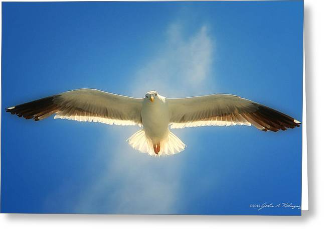 Greeting Card featuring the photograph Portrait Of A Seagull by John A Rodriguez