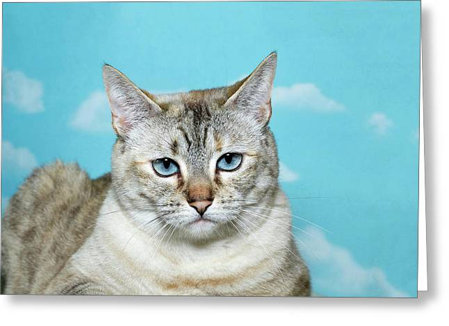Portrait Of A Skeptical Lynx Cat Greeting Card