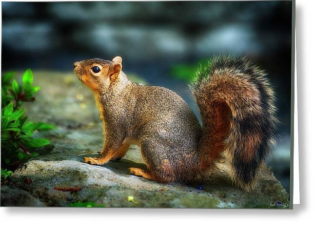 Portrait Of A Squirrell Greeting Card