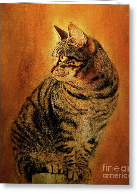 Portrait Of A Tabby Cat Greeting Card by Kathy Franklin