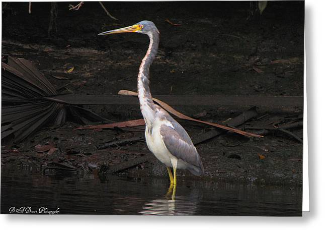 Portrait Of A Tri-colored Heron Greeting Card by Barbara Bowen