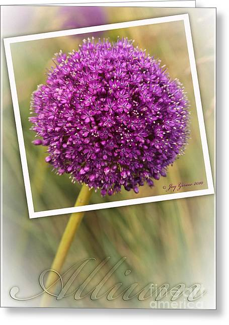 Portrait Of An Allium Greeting Card by Joy Gerow