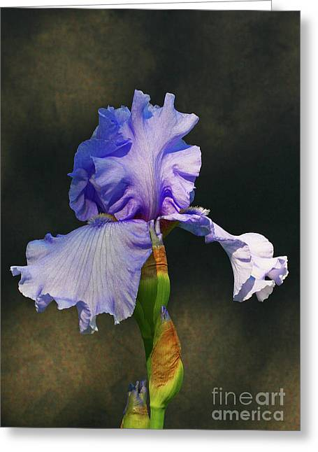 Greeting Card featuring the photograph Portrait Of An Iris by Steve Augustin