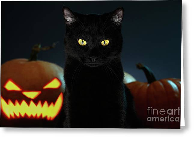 Portrait Of Black Cat With Pumpkin On Halloween Greeting Card