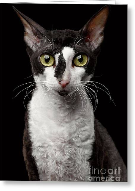Portrait Of Cornish Rex Looking In Camera Isolated On Black  Greeting Card by Sergey Taran