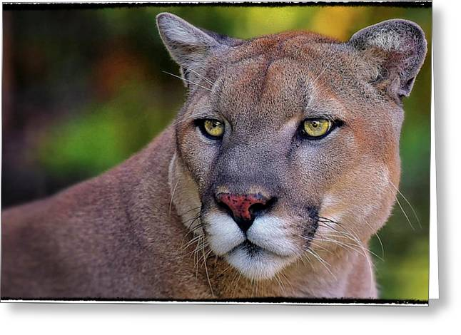 Portrait Of  Cougar  Greeting Card