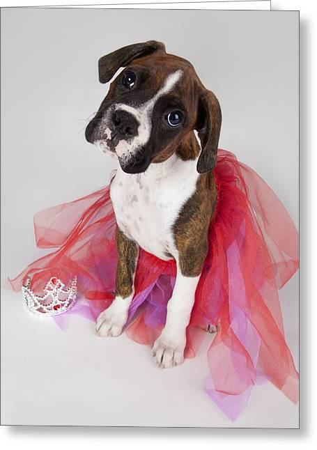 Ballet Dancers Photographs Greeting Cards - Portrait Of Dog Wearing Tutu Greeting Card by Leah Hammond