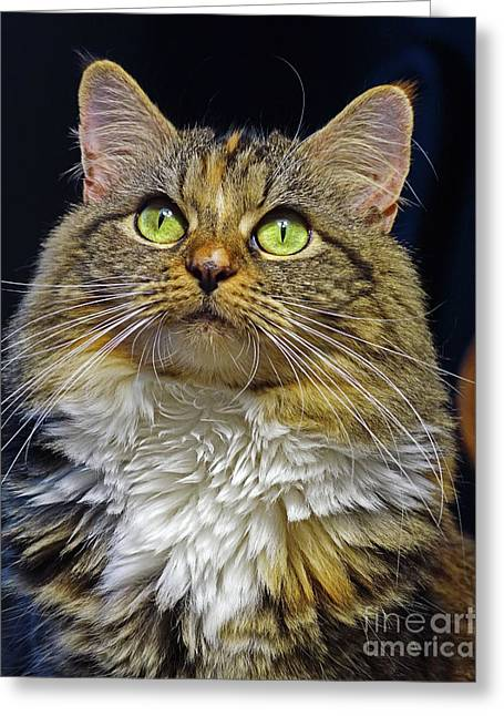 Portrait Of Holly Greeting Card