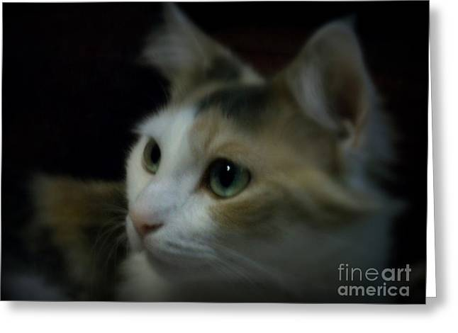 Portrait Of Miss Kitty Greeting Card by Emily Kelley