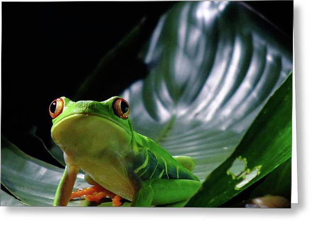 Portrait Of Mr. Frog From Tortuguero Greeting Card by Airestudios Photography
