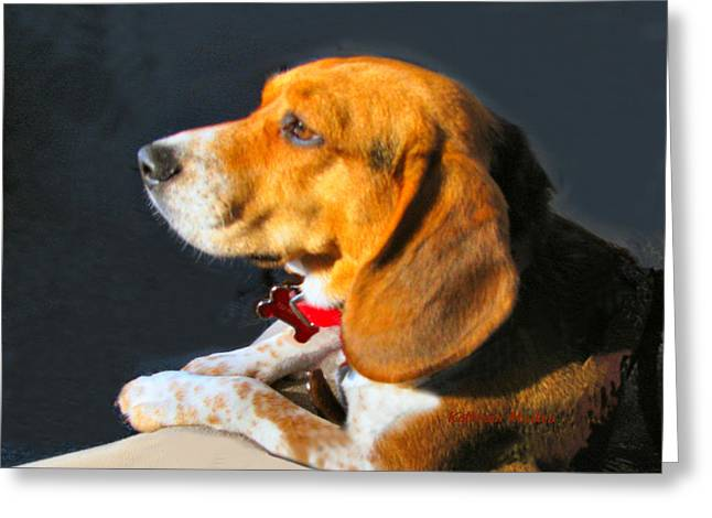 Greeting Card featuring the photograph Portrait Of Pebbles - The Independent Beagle by KLM Kathel