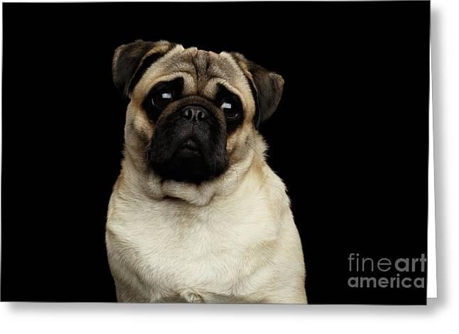 Portrait Of Pug Greeting Card