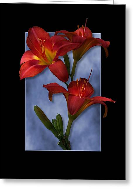 Portrait Of Red Lily Flowers Greeting Card