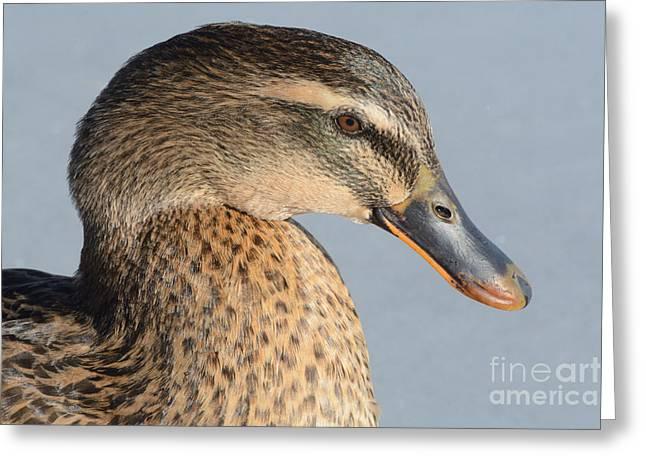 Portrait Of Rouen-mallard Mixed Breed Duck Hen Greeting Card by Merrimon Crawford