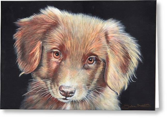 Portrait Of Toby Greeting Card