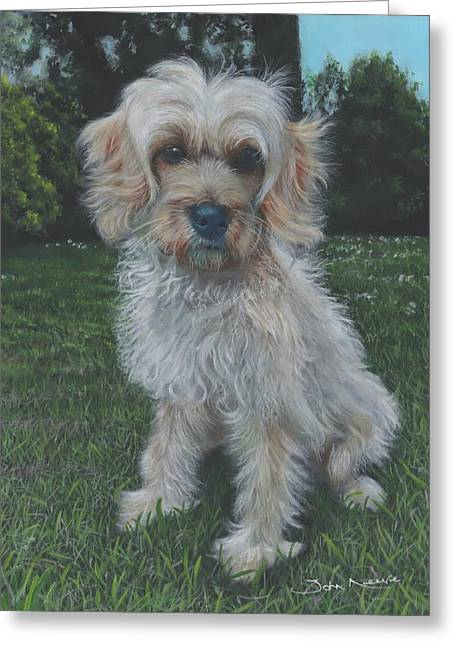 Portrait Of Toffee Greeting Card