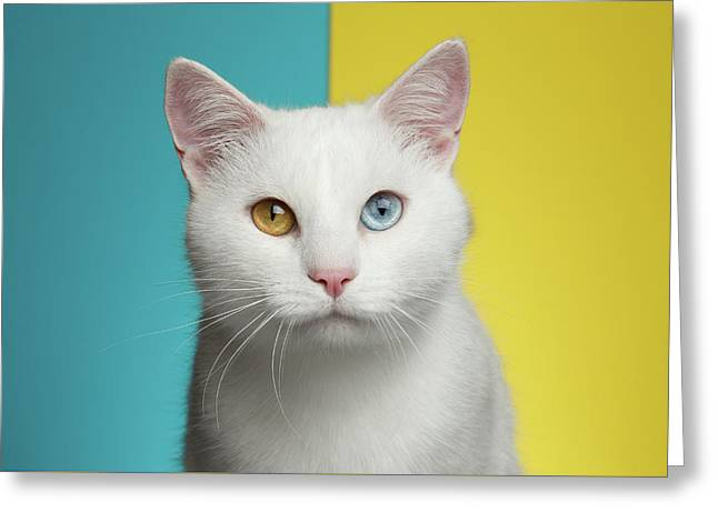 Portrait Of White Cat On Blue And Yellow Background Greeting Card by Sergey Taran