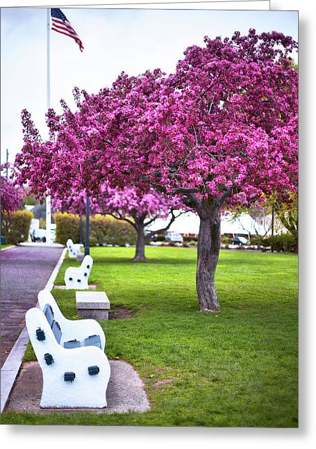 Portsmouth Bench And Tree Greeting Card by Eric Gendron