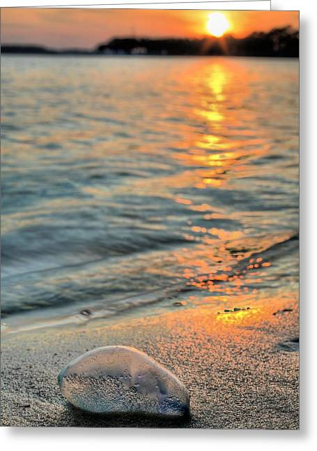 Portuguese Man Of War Greeting Card by JC Findley