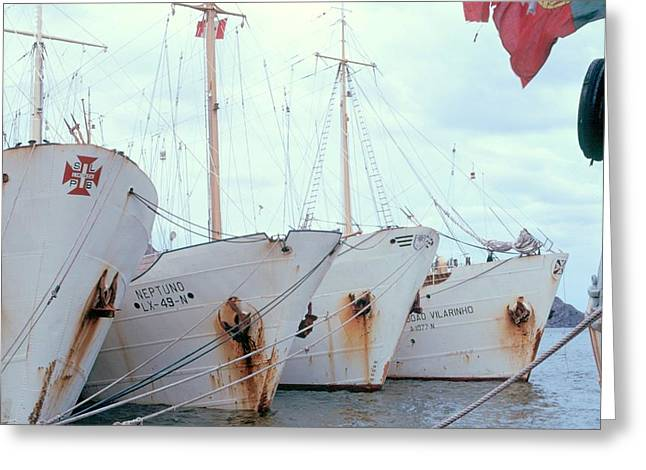 Greeting Card featuring the photograph Portuguese White Fleet by Douglas Pike