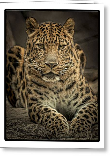Greeting Card featuring the photograph Poser by Cheri McEachin