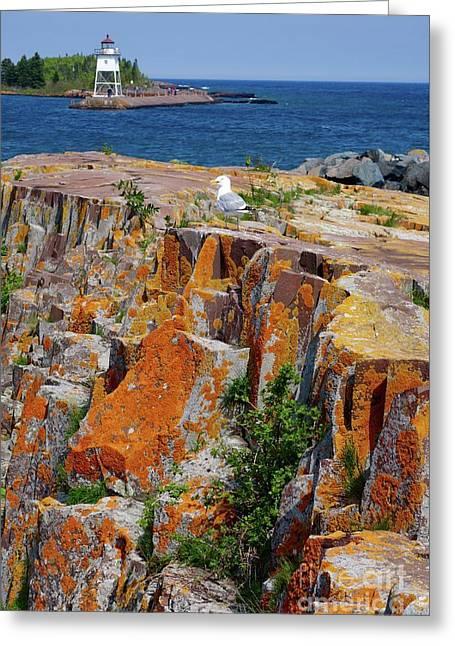 Posing Gull Greeting Card by Sandra Updyke