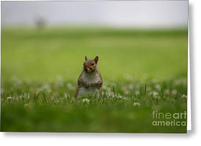 Posing Squirrel Greeting Card