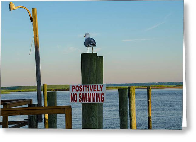 Positively No Swimming - Jersey Shore Greeting Card by Bill Cannon