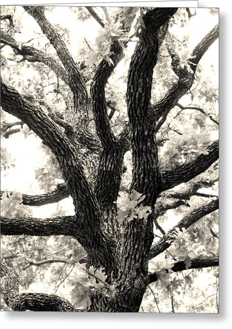 Post Oak Greeting Card by Jeannie Burleson