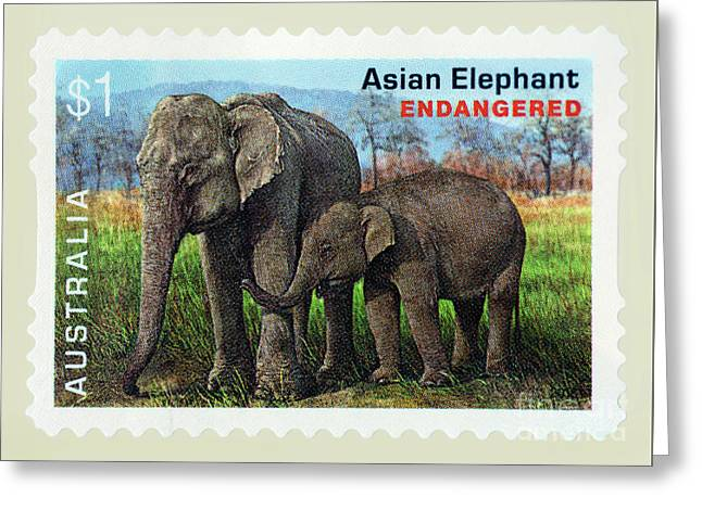 Greeting Card featuring the photograph Postage Stamp - Asian Elephant By Kaye Menner by Kaye Menner