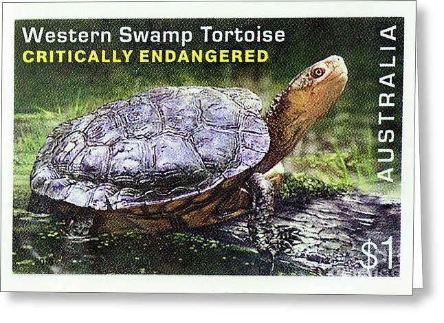 Greeting Card featuring the photograph Postage Stamp - Western Swamp Tortoise By Kaye Menner by Kaye Menner