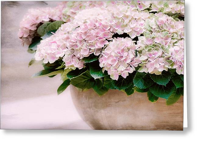 Pot Of Hydrangeas Greeting Card